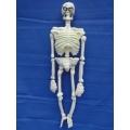 Huur 1x Skelet Hangend